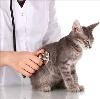 Ветеринарные клиники в Васильево